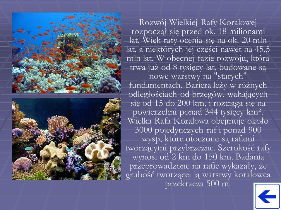 Rozwój Wielkiej Rafy Koralowej rozpoczął się przed ok. 18 milionami lat. Wiek rafy ocenia się na ok. 20 mln lat, a niektórych jej części nawet na 45,5