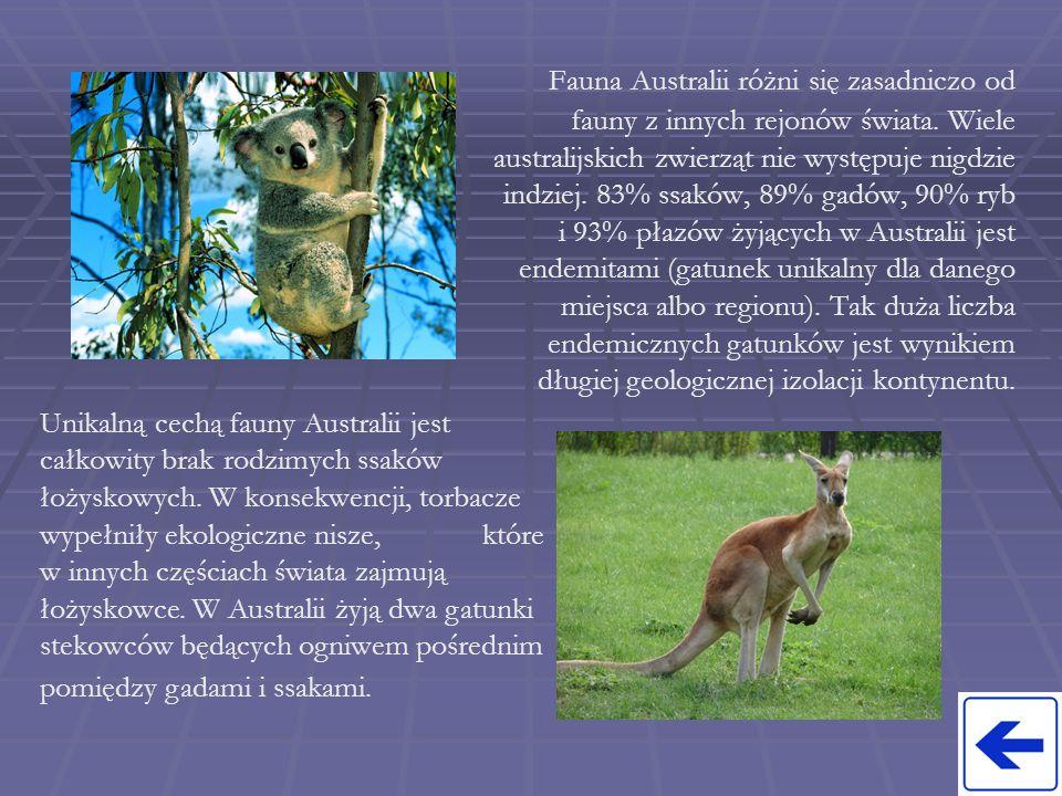 Fauna Australii różni się zasadniczo od fauny z innych rejonów świata. Wiele australijskich zwierząt nie występuje nigdzie indziej. 83% ssaków, 89% ga