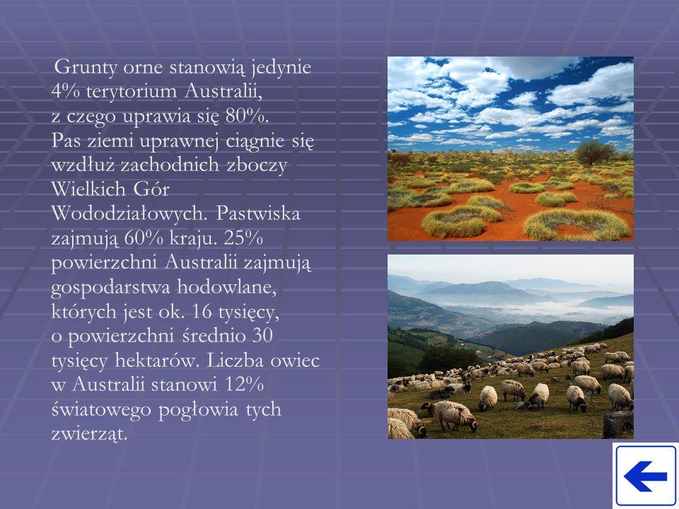Grunty orne stanowią jedynie 4% terytorium Australii, z czego uprawia się 80%. Pas ziemi uprawnej ciągnie się wzdłuż zachodnich zboczy Wielkich Gór Wo
