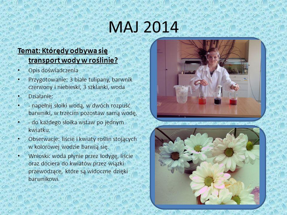 MAJ 2014 Temat: Którędy odbywa się transport wody w roślinie.