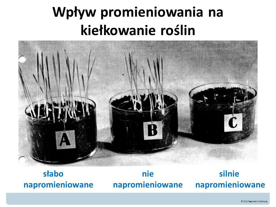 Wpływ promieniowania na kiełkowanie roślin słabo napromieniowane © 2012 Diagnoseklinik Hamburg nie napromieniowane silnie napromieniowane