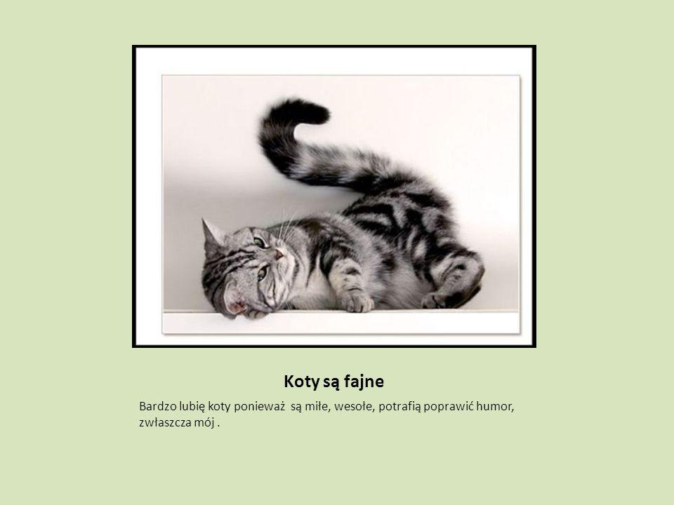 Koty są fajne Bardzo lubię koty ponieważ są miłe, wesołe, potrafią poprawić humor, zwłaszcza mój.