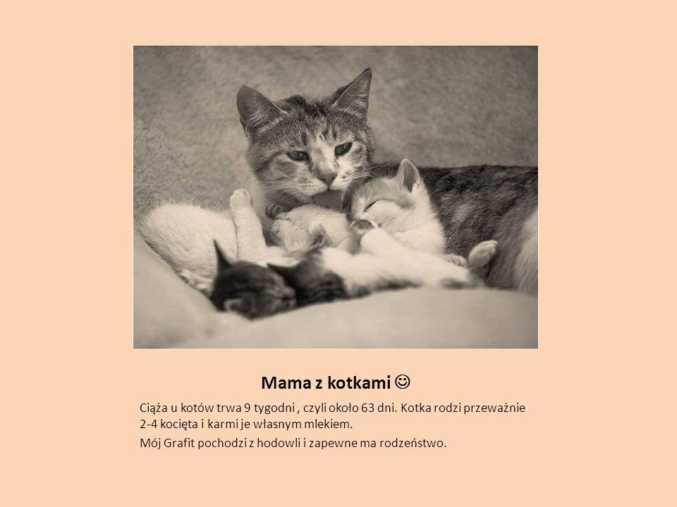 Mama z kotkami Ciąża u kotów trwa 9 tygodni, czyli około 63 dni.