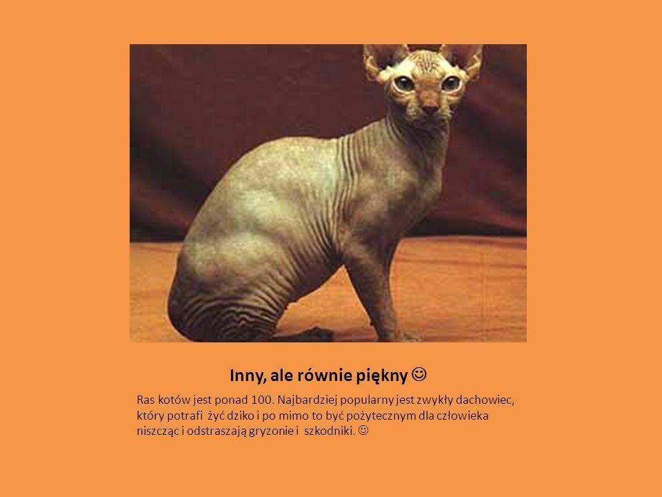 Inny, ale równie piękny Ras kotów jest ponad 100. Najbardziej popularny jest zwykły dachowiec, który potrafi żyć dziko i po mimo to być pożytecznym dl