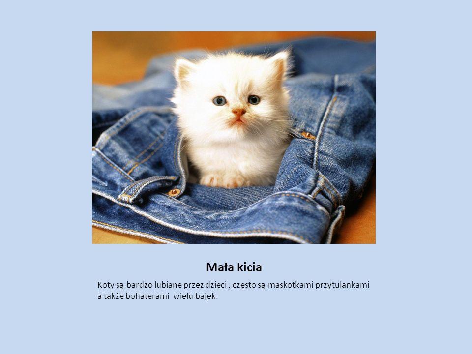 Mała kicia Koty są bardzo lubiane przez dzieci, często są maskotkami przytulankami a także bohaterami wielu bajek.