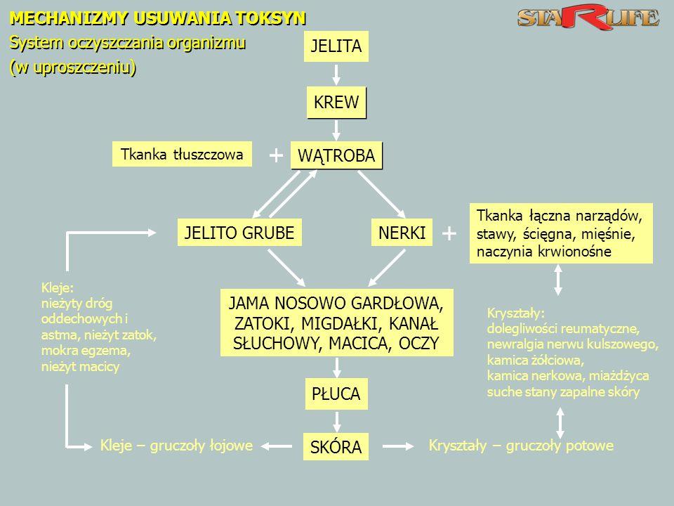 Kryształy – gruczoły potowe MECHANIZMY USUWANIA TOKSYN System oczyszczania organizmu (w uproszczeniu) MECHANIZMY USUWANIA TOKSYN System oczyszczania organizmu (w uproszczeniu) JELITA KREW Tkanka tłuszczowa WĄTROBA Kleje: nieżyty dróg oddechowych i astma, nieżyt zatok, mokra egzema, nieżyt macicy JELITO GRUBE Tkanka łączna narządów, stawy, ścięgna, mięśnie, naczynia krwionośne NERKI Kryształy: dolegliwości reumatyczne, newralgia nerwu kulszowego, kamica żółciowa, kamica nerkowa, miażdżyca suche stany zapalne skóry JAMA NOSOWO GARDŁOWA, ZATOKI, MIGDAŁKI, KANAŁ SŁUCHOWY, MACICA, OCZY PŁUCA SKÓRA Kleje – gruczoły łojowe