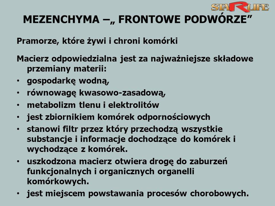 MEZENCHYMA – FRONTOWE PODWÓRZE Pramorze, które żywi i chroni komórki Macierz odpowiedzialna jest za najważniejsze składowe przemiany materii: gospodar