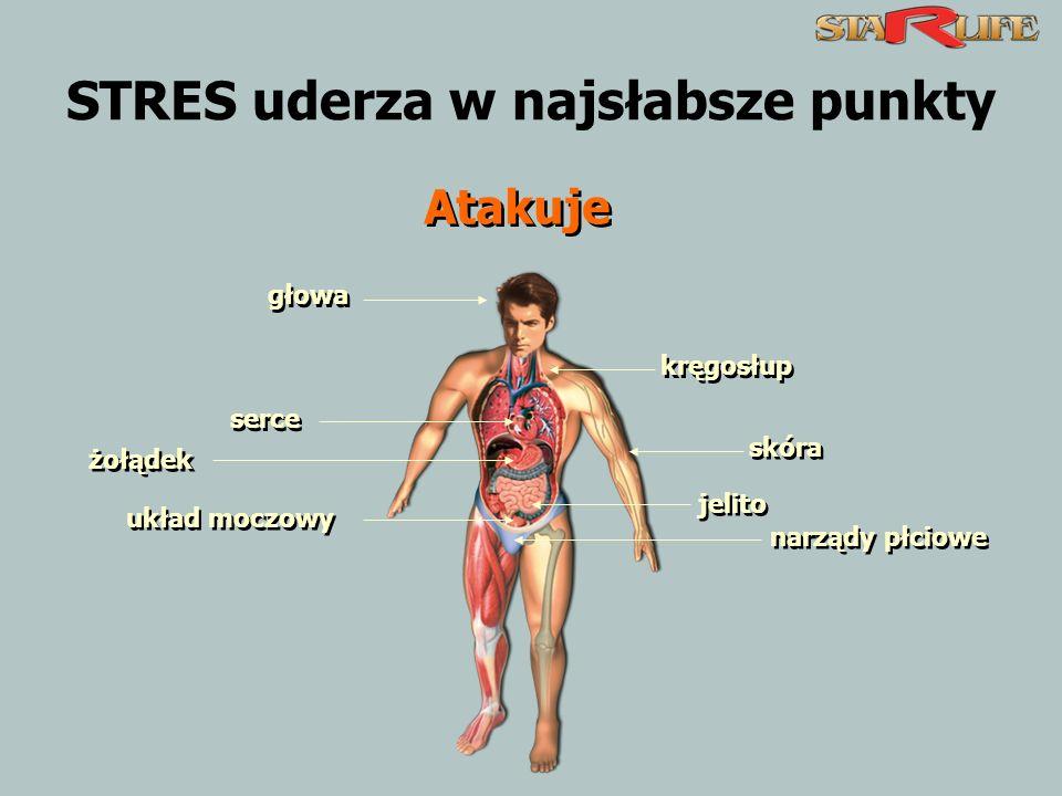 STRES uderza w najsłabsze punkty głowa kręgosłup serce skóra żołądek jelito układ moczowy narządy płciowe Atakuje