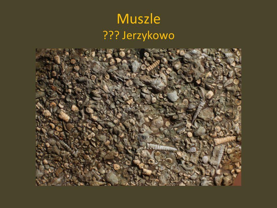 Muszle ??? Jerzykowo