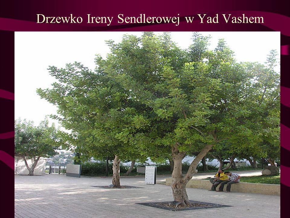Drzewko Ireny Sendlerowej w Yad Vashem
