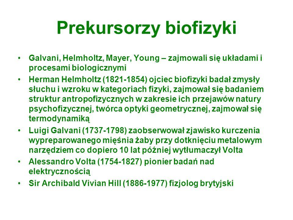 Prekursorzy biofizyki Galvani, Helmholtz, Mayer, Young – zajmowali się układami i procesami biologicznymi Herman Helmholtz (1821-1854) ojciec biofizyk