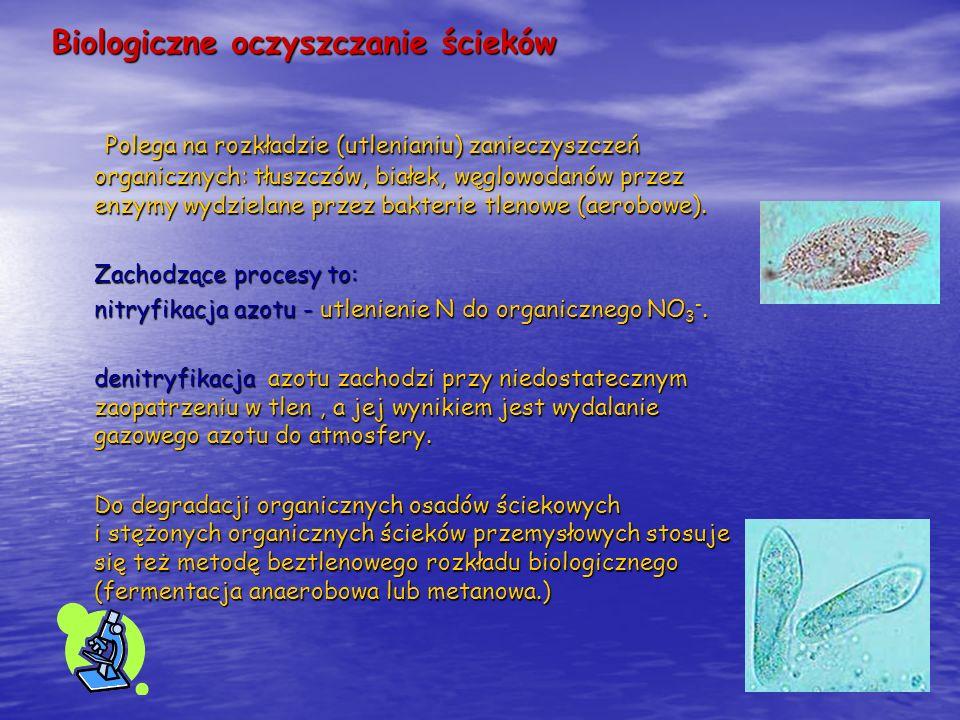 Biologiczne oczyszczanie ścieków Polega na rozkładzie (utlenianiu) zanieczyszczeń organicznych: tłuszczów, białek, węglowodanów przez enzymy wydzielan