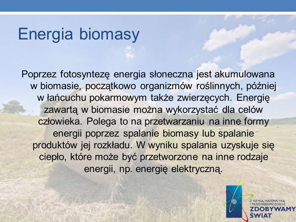Energia biomasy Poprzez fotosyntezę energia słoneczna jest akumulowana w biomasie, początkowo organizmów roślinnych, później w łańcuchu pokarmowym tak