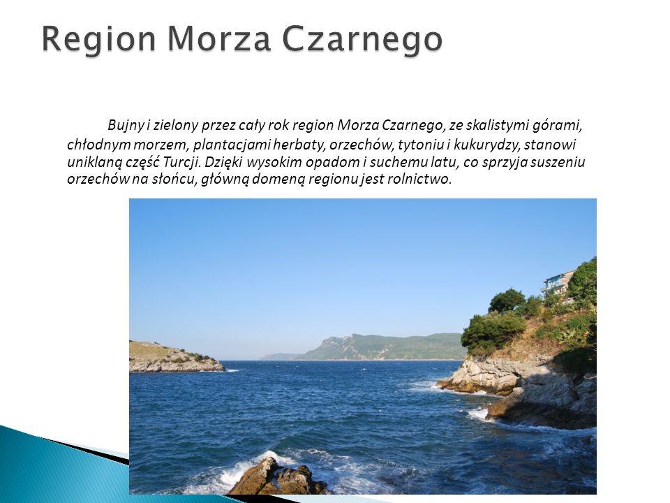 Bujny i zielony przez cały rok region Morza Czarnego, ze skalistymi górami, chłodnym morzem, plantacjami herbaty, orzechów, tytoniu i kukurydzy, stano