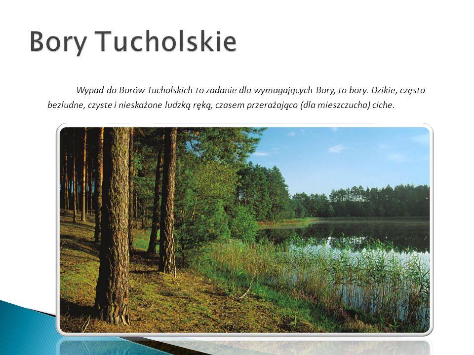 Wypad do Borów Tucholskich to zadanie dla wymagających Bory, to bory. Dzikie, często bezludne, czyste i nieskażone ludzką ręką, czasem przerażająco (d