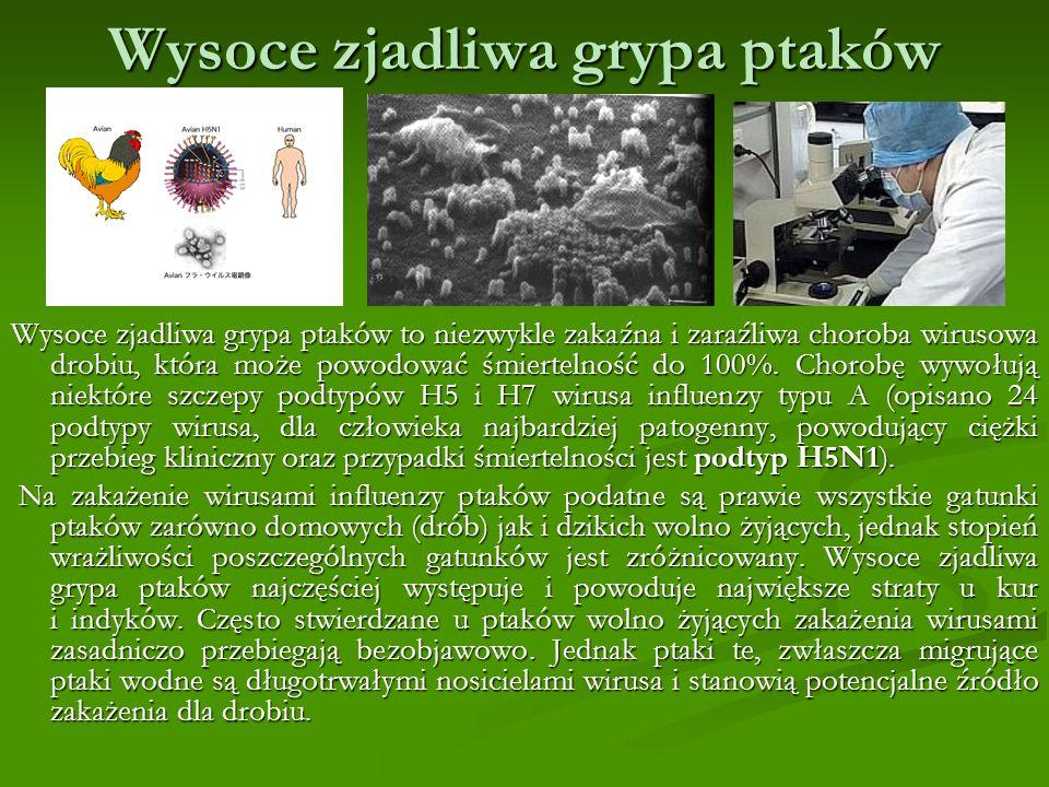 Wysoce zjadliwa grypa ptaków Wysoce zjadliwa grypa ptaków to niezwykle zakaźna i zaraźliwa choroba wirusowa drobiu, która może powodować śmiertelność do 100%.