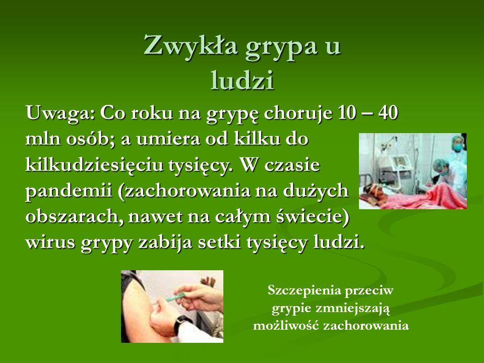 Uwaga: Co roku na grypę choruje 10 – 40 mln osób; a umiera od kilku do kilkudziesięciu tysięcy.