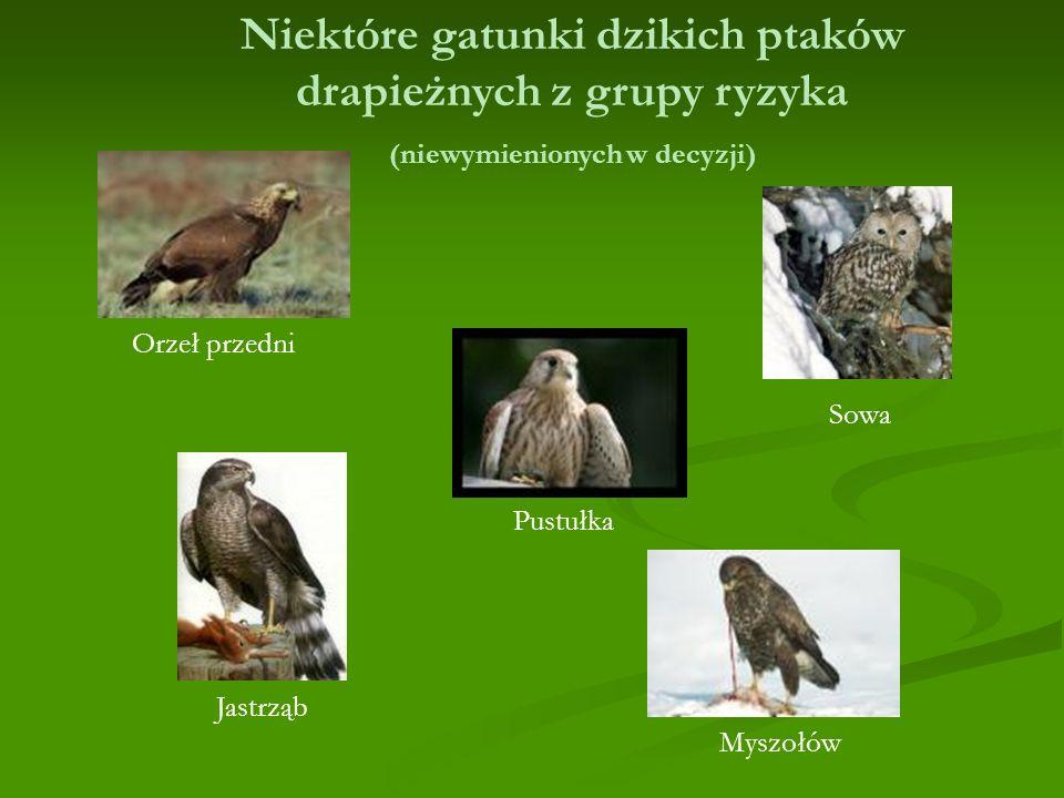 Sowa Pustułka Orzeł przedni Jastrząb Myszołów Niektóre gatunki dzikich ptaków drapieżnych z grupy ryzyka (niewymienionych w decyzji)