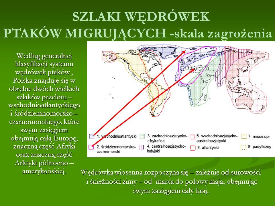 SZLAKI WĘDRÓWEK PTAKÓW MIGRUJĄCYCH -skala zagrożenia Według generalnej klasyfikacji systemu wędrówek ptaków, Polska znajduje się w obrębie dwóch wielkich szlaków przelotu – wschodnioatlantyckiego i śródziemnomorsko – czarnomorskiego, które swym zasięgiem obejmują całą Europę, znaczną część Afryki oraz znaczną część Arktyki północno – amerykańskiej.