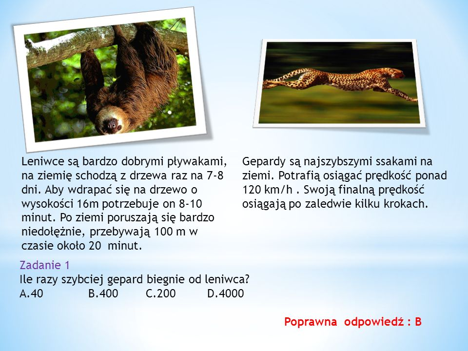 Gepardy są najszybszymi ssakami na ziemi.Potrafią osiągać prędkość ponad 120 km/h.