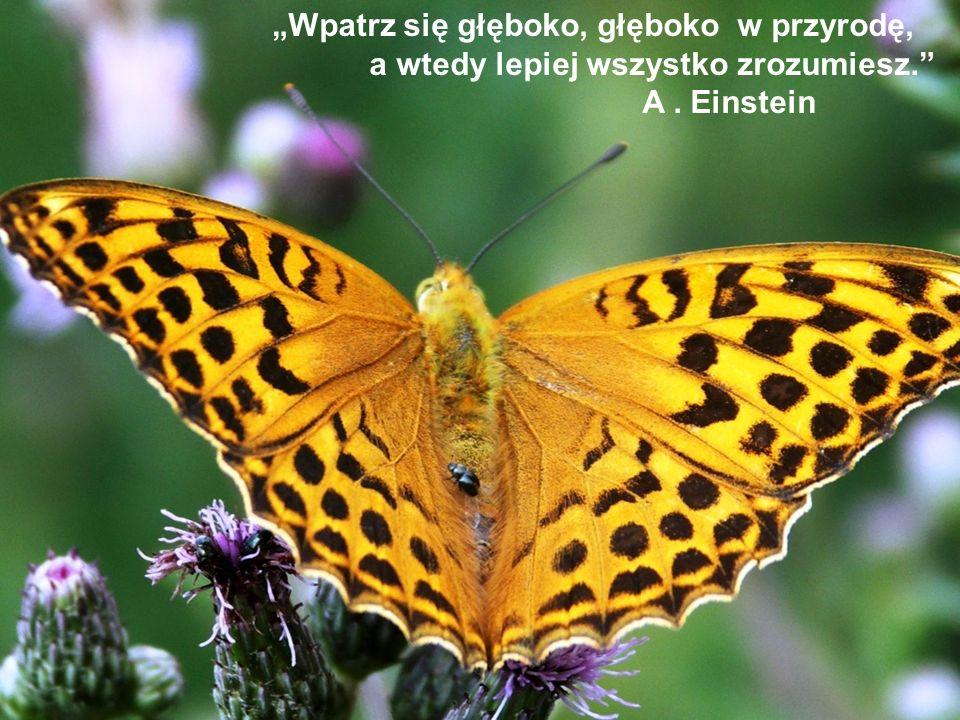 Wpatrz się głęboko, głęboko w przyrodę, a wtedy lepiej wszystko zrozumiesz. A. Einstein