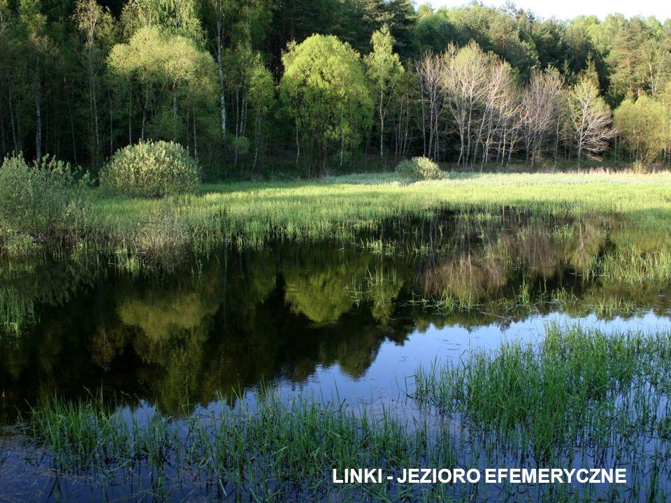 LINKI - JEZIORO EFEMERYCZNE