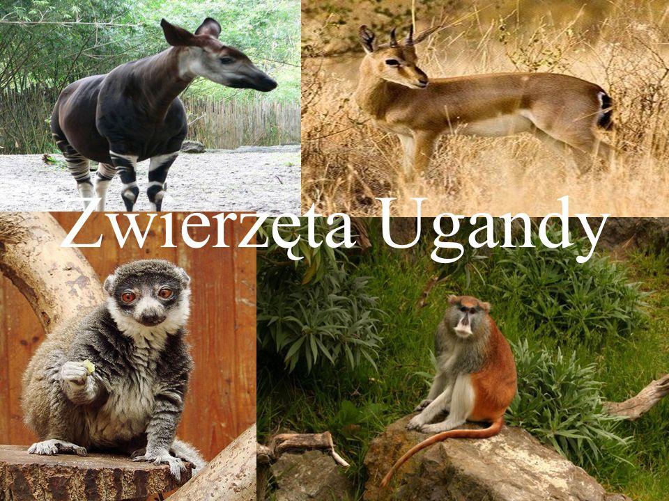 Zwierzęta Ugandy