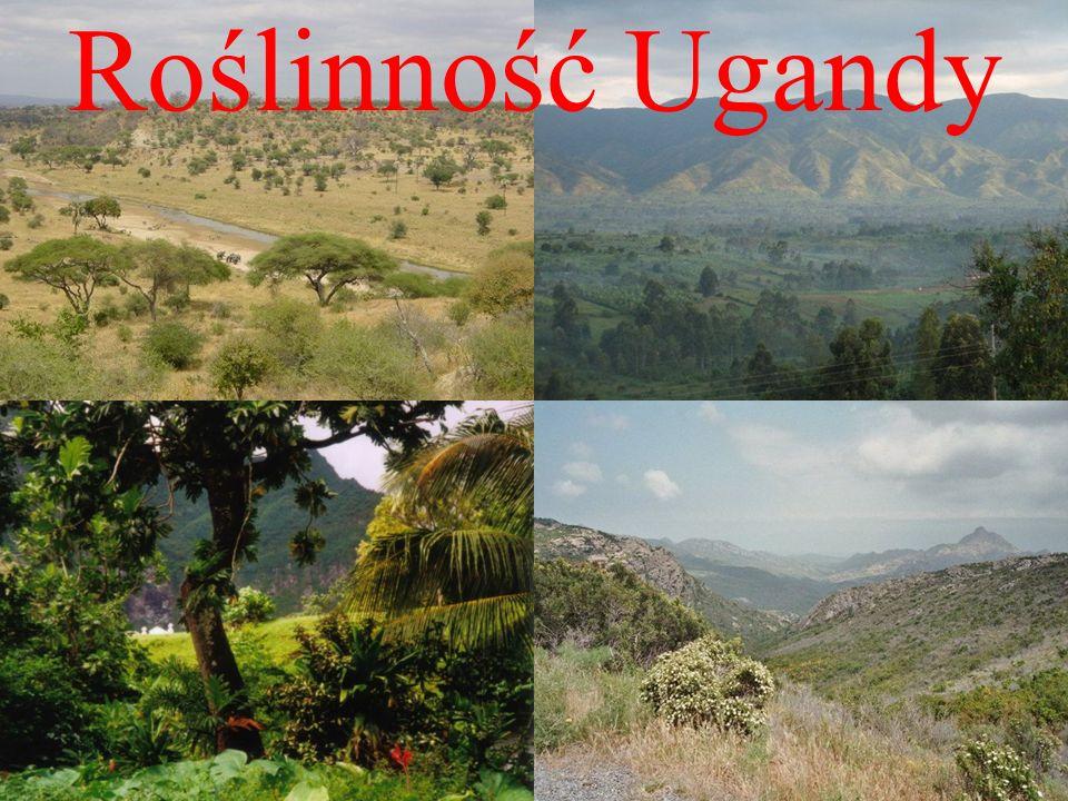 Roślinność Ugandy