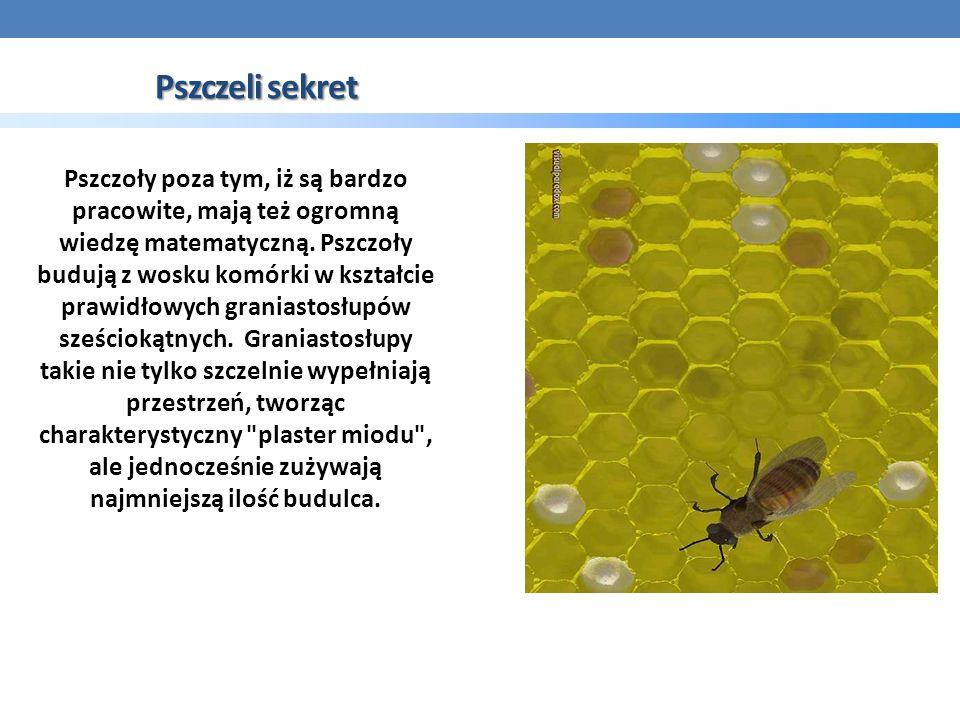 Pszczeli sekret Pszczoły poza tym, iż są bardzo pracowite, mają też ogromną wiedzę matematyczną.
