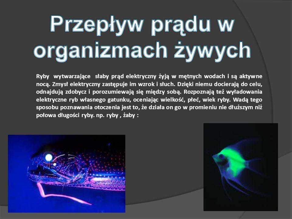 Ryby wytwarzające słaby prąd elektryczny żyją w mętnych wodach i są aktywne nocą.