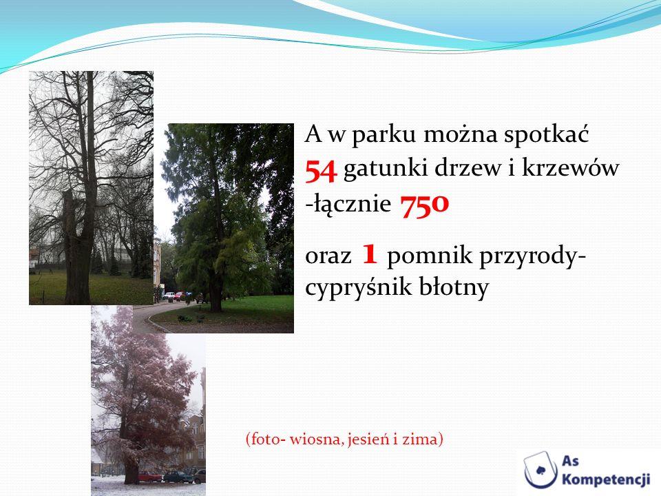 A w parku można spotkać 54 gatunki drzew i krzewów -łącznie 750 oraz 1 pomnik przyrody- cypryśnik błotny (foto- wiosna, jesień i zima)