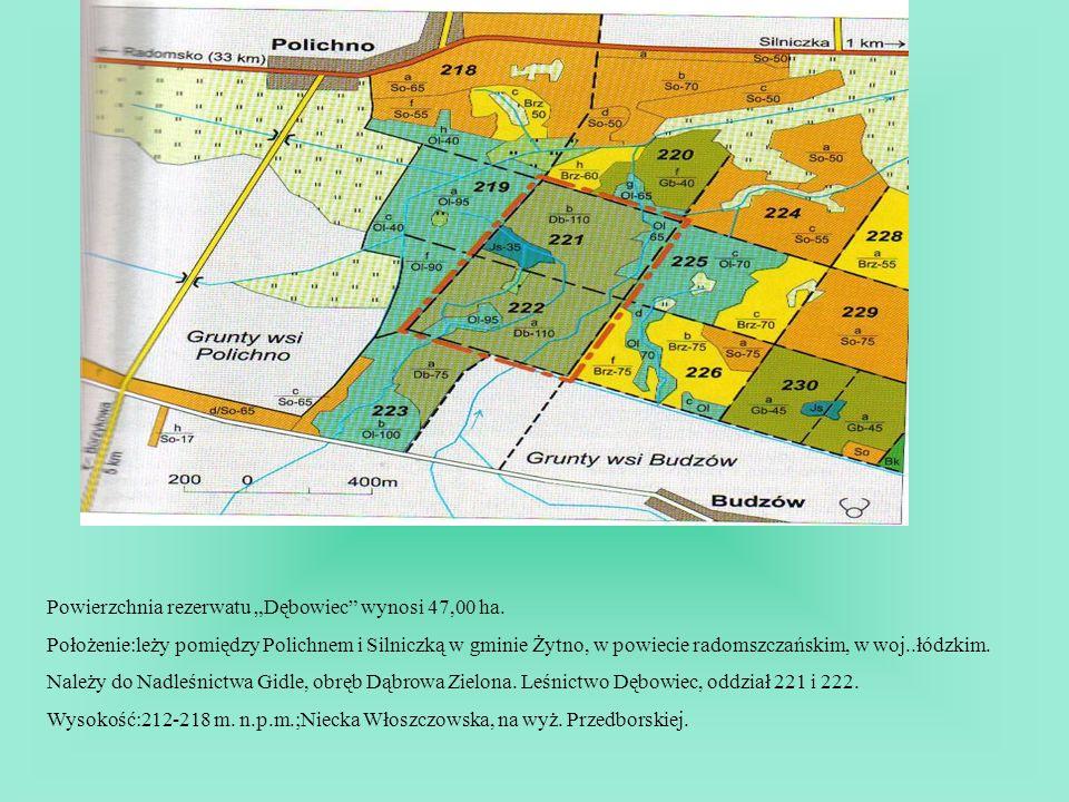 Powierzchnia rezerwatu Dębowiec wynosi 47,00 ha. Położenie:leży pomiędzy Polichnem i Silniczką w gminie Żytno, w powiecie radomszczańskim, w woj..łódz