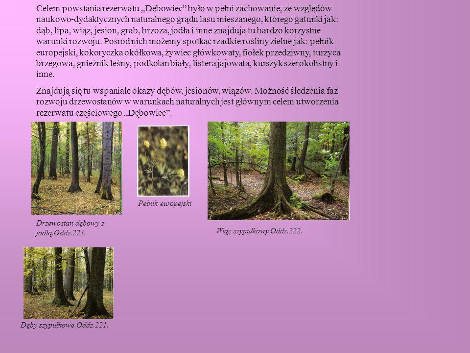 Celem powstania rezerwatu Dębowiec było w pełni zachowanie, ze względów naukowo-dydaktycznych naturalnego grądu lasu mieszanego, którego gatunki jak: