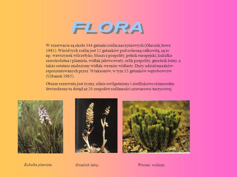 W rezerwacie są około 344 gatunki roślin naczyniowych (Olaczek,Sowa 1981). Wśród tych roślin jest 12 gatunków pod ochroną całkowitą, są to np.:wawrzyn