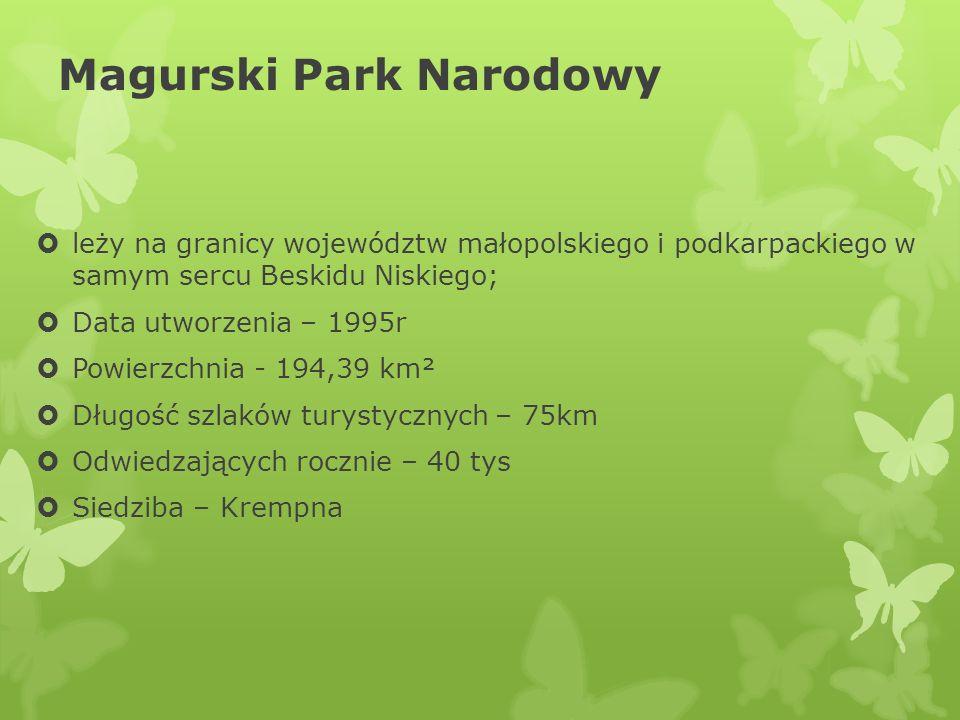 Magurski Park Narodowy leży na granicy województw małopolskiego i podkarpackiego w samym sercu Beskidu Niskiego; Data utworzenia – 1995r Powierzchnia