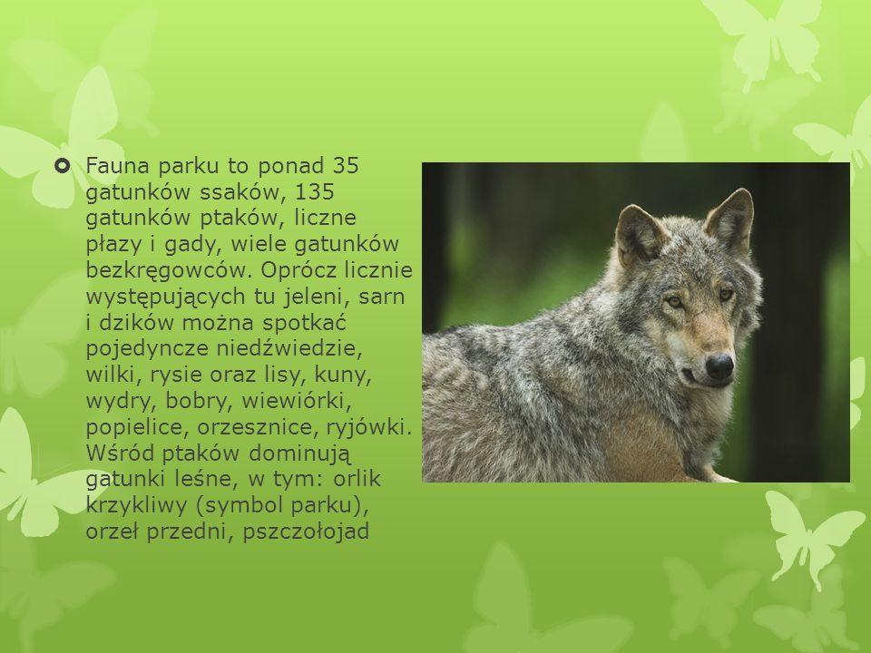 Fauna parku to ponad 35 gatunków ssaków, 135 gatunków ptaków, liczne płazy i gady, wiele gatunków bezkręgowców. Oprócz licznie występujących tu jeleni