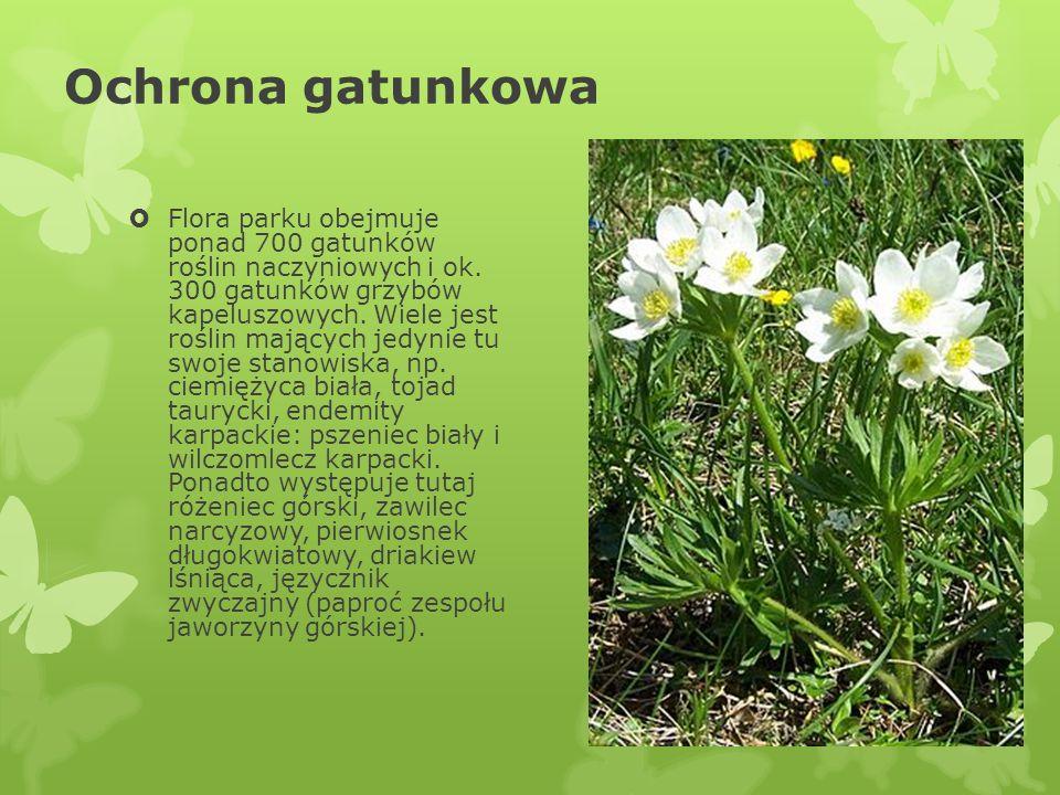 Ochrona gatunkowa Flora parku obejmuje ponad 700 gatunków roślin naczyniowych i ok. 300 gatunków grzybów kapeluszowych. Wiele jest roślin mających jed