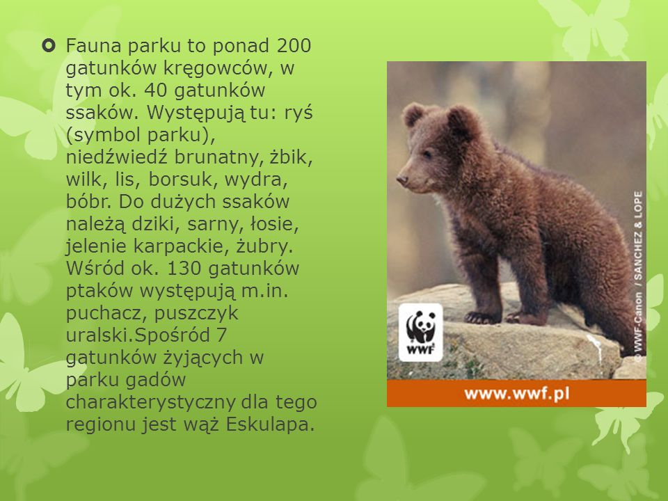 Fauna parku to ponad 200 gatunków kręgowców, w tym ok. 40 gatunków ssaków. Występują tu: ryś (symbol parku), niedźwiedź brunatny, żbik, wilk, lis, bor
