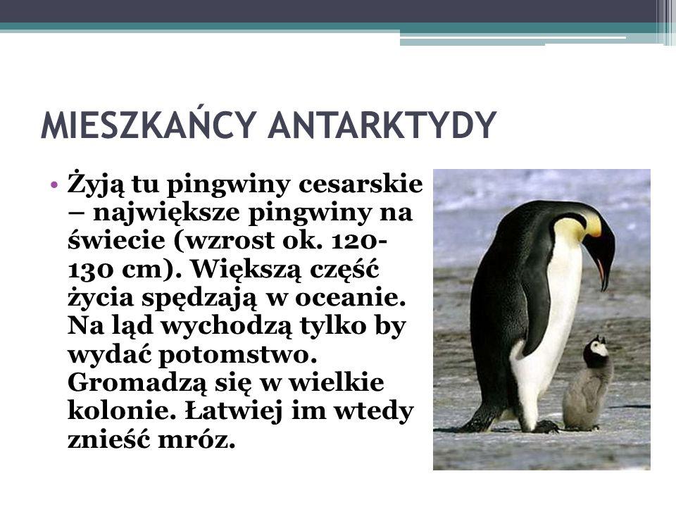 STACJE BADAWCZE Obecnie pracują na Antarktydzie 54 stacje badawcze (37 całorocznych i 17 tylko letnich) Polska Stacja Badawcza im. Henryka Arctowskieg