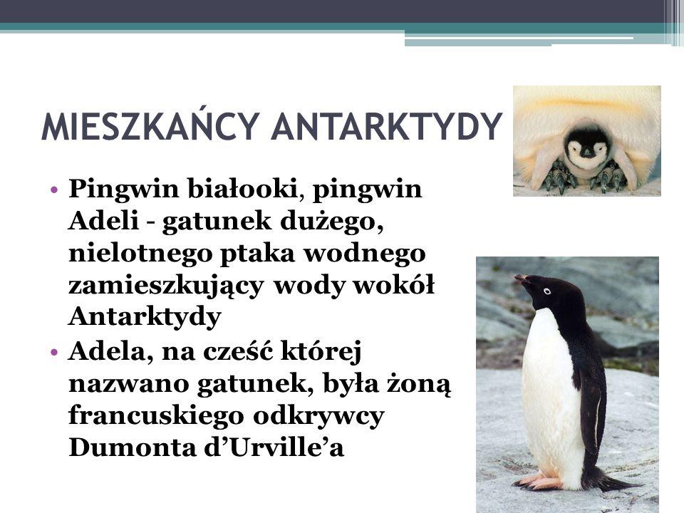 MIESZKAŃCY ANTARKTYDY Żyją tu pingwiny cesarskie – największe pingwiny na świecie (wzrost ok. 120- 130 cm). Większą część życia spędzają w oceanie. Na