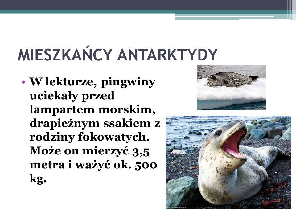 MIESZKAŃCY ANTARKTYDY Oprócz pingwinów, w lodowatych wodach Antarktyki żyją: foki, płetwale błękitne, orki, kałamarnice olbrzymie. Na wybrzeżach wystę