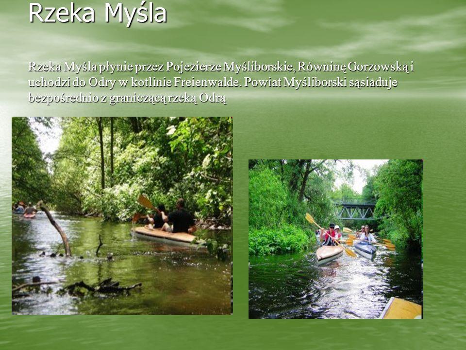 Rzeka Myśla Rzeka Myśla płynie przez Pojezierze Myśliborskie, Równinę Gorzowską i uchodzi do Odry w kotlinie Freienwalde. Powiat Myśliborski sąsiaduje