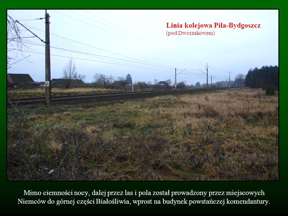 Mimo ciemności nocy, dalej przez las i pola został prowadzony przez miejscowych Niemców do górnej części Białośliwia, wprost na budynek powstańczej ko