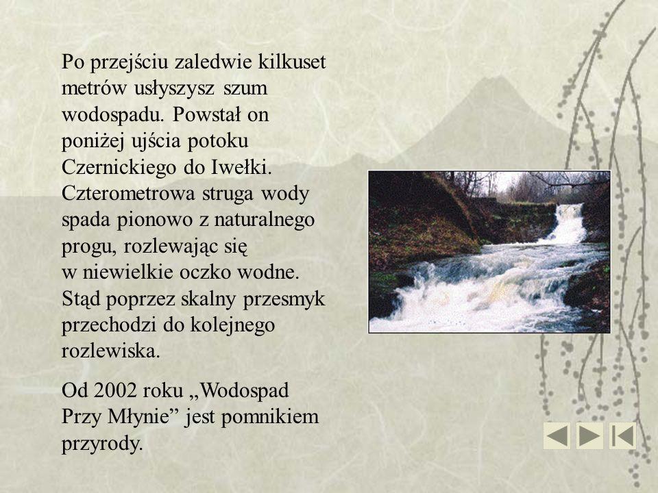 Po przejściu zaledwie kilkuset metrów usłyszysz szum wodospadu. Powstał on poniżej ujścia potoku Czernickiego do Iwełki. Czterometrowa struga wody spa