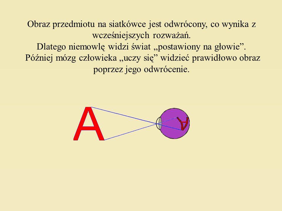 Siatkówka ma dwa rodzaje zakończeń układu nerwowego: Pręciki, które nie są czułe na barwę, ale 1000 razy czulsze na światło od czopków, i wspomniane c