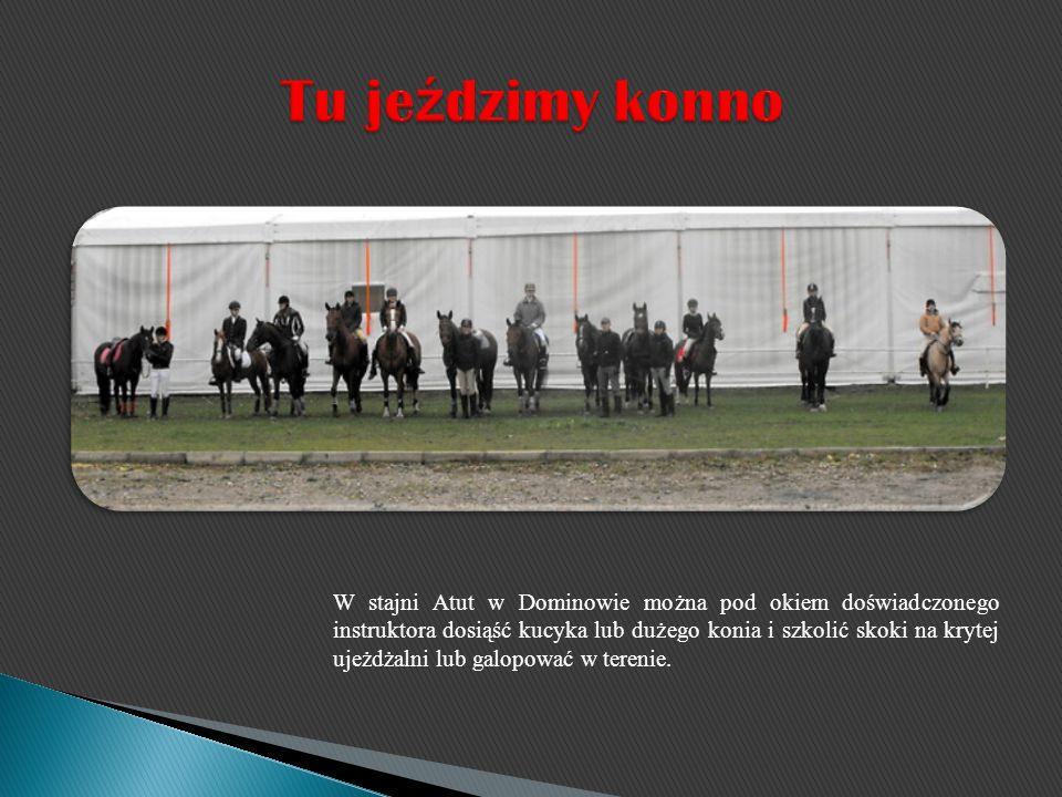 W stajni Atut w Dominowie można pod okiem doświadczonego instruktora dosiąść kucyka lub dużego konia i szkolić skoki na krytej ujeżdżalni lub galopowa