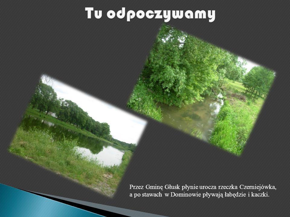 Przez Gminę Głusk płynie urocza rzeczka Czerniejówka, a po stawach w Dominowie pływają łabędzie i kaczki.