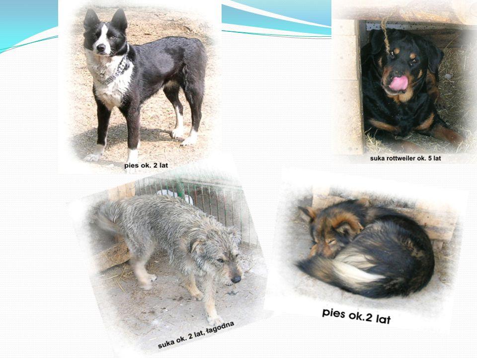 Wykonaliśmy ulotki, by pomóc niektórym zwierzętom w znalezieniu domu
