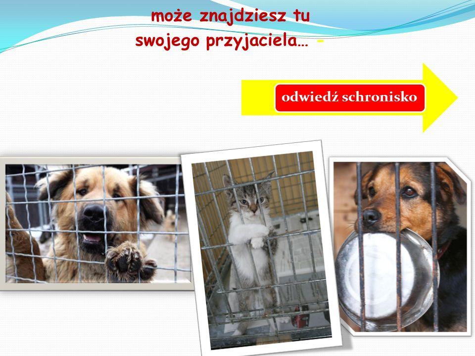 SCHRONISKO DLA BEZDOMNYCH ZWIERZĄT W CHORZOWIE ZAPRASZA zwierzęta wydawane są bezpłatnie - tylko osobom pełnoletnim (z własnym dowodem osobistym) należy ze sobą wziąć smycz i obrożę dla psa dla kota – transporter schronisko czynne: pon – pt: 10 00 do 16 00 sob-ndz: 10 00 do 14 00