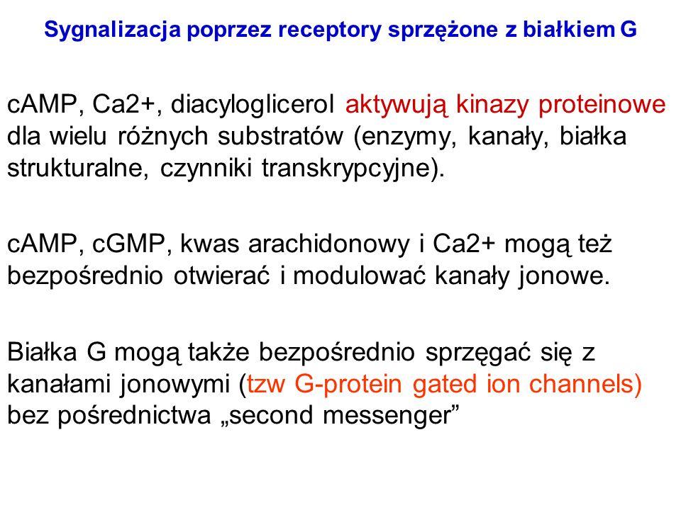 Sygnalizacja poprzez receptory sprzężone z białkiem G cAMP, Ca2+, diacyloglicerol aktywują kinazy proteinowe dla wielu różnych substratów (enzymy, kan